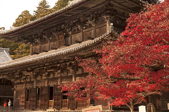 vistas del otoño en Japon