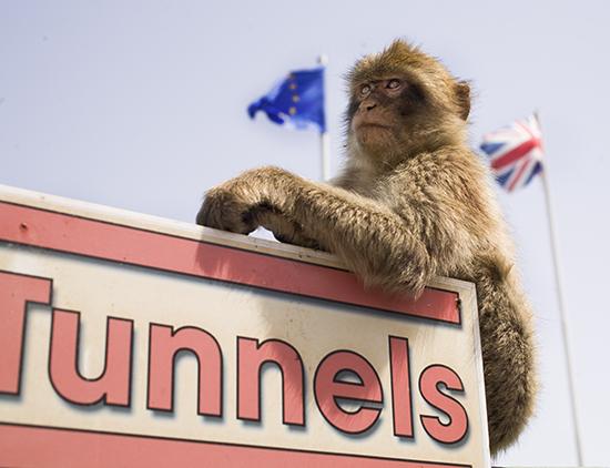 Monos en Gibraltar donde verlos