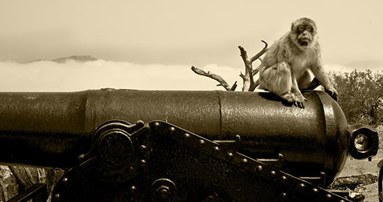 Gibraltar monos historia
