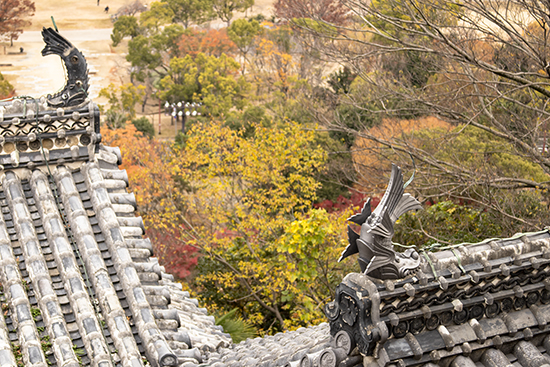carpas castillo Himeji detalle