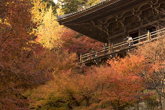 otoño en monte shosha japon