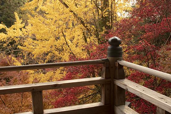 monte shosha en noviembre