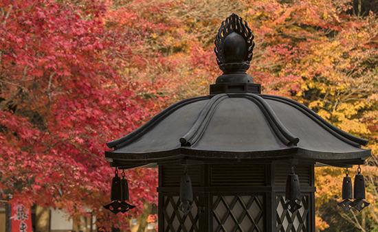 noviembre en Japon