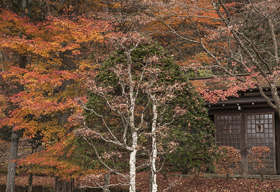 otoño en Takayama