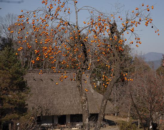 frutas Japón