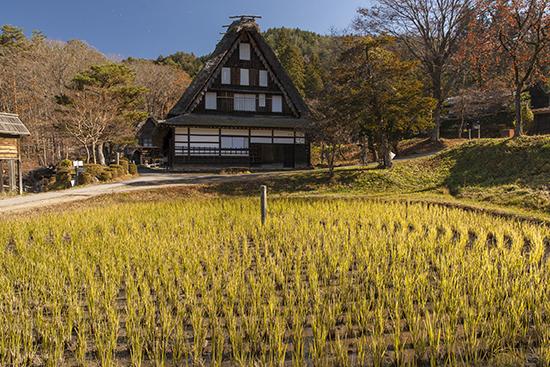 cultivo de arroz Japón