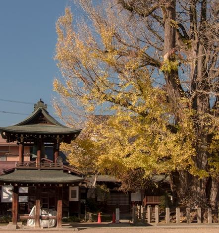 árboles milenarios Japón Takayama