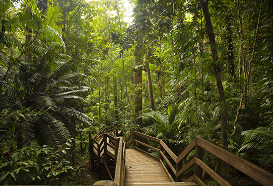 Jindalba walk Daintree forest Queensland