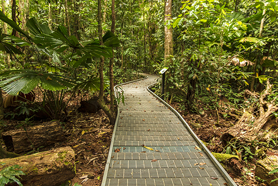 trails Daintree Forest Cape Tribulation Queensland
