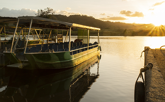 tour fluvial Daintree river Queensland