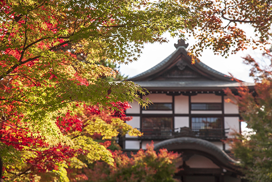 noviembre en Japón