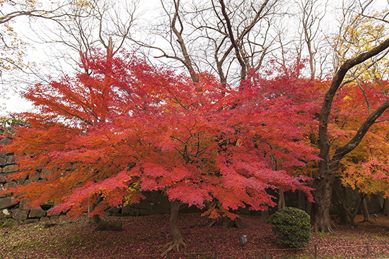 Kanazawa en noviembre en otoño