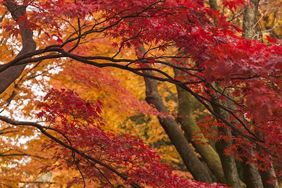 jardines castillo Kanazawa
