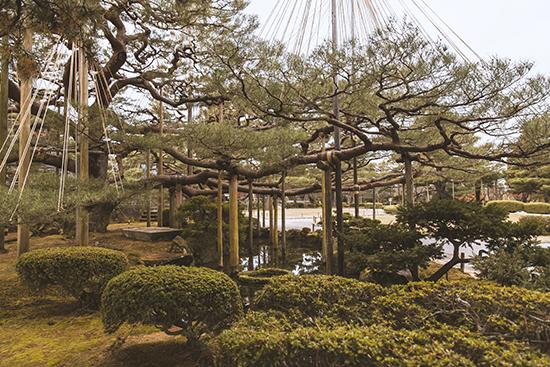jardin Kenrokuen Japon
