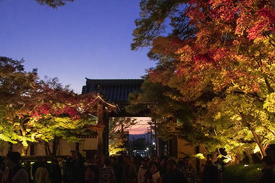 jardin eikando temple iluminación nocturna