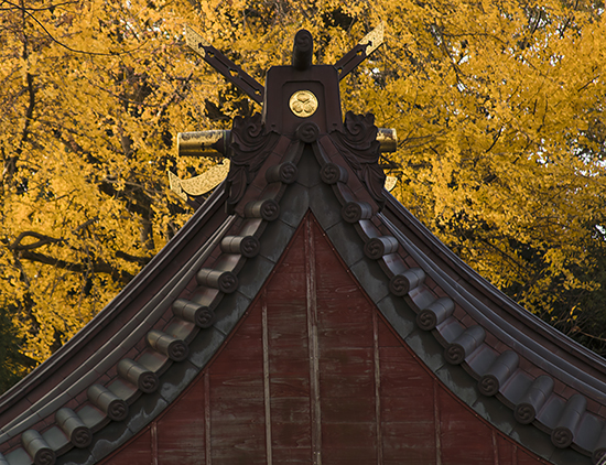 Otoño en Kanazawa noviembre