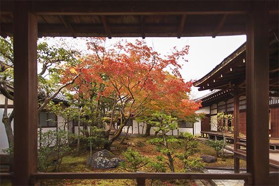 ventana con vistas otoño