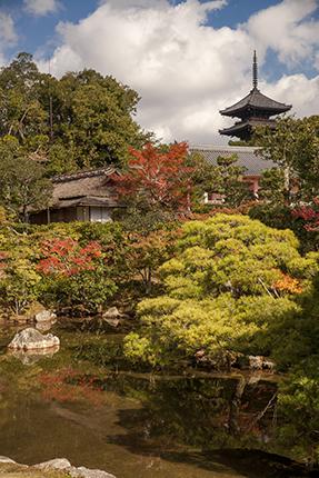 momiji en japon pagoda kioto