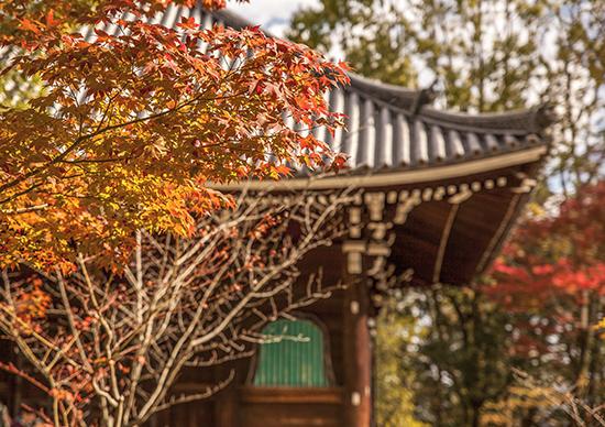 otoño en kioto