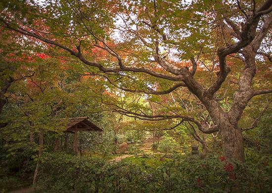 japon en otoño