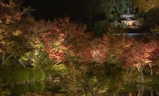 eikando temple iluminacion especial nocturna otoño