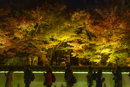 eikando garden iluminacion nocturna en otoño