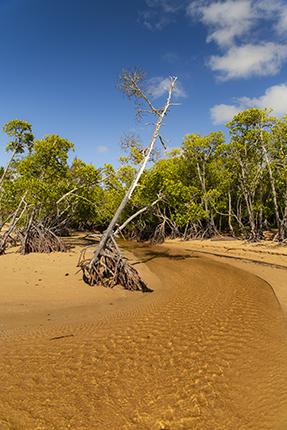 manglares en Australia