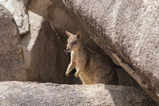 donde ver fauna en australia