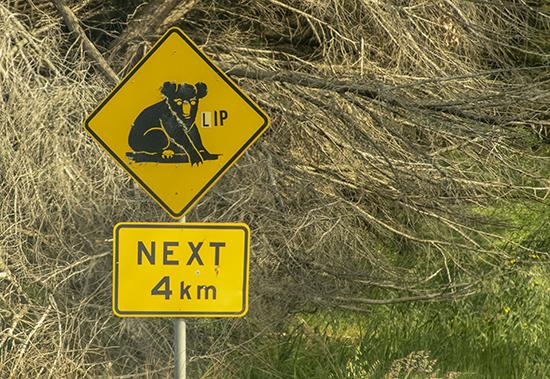 señal tráfico de koalas en Australia