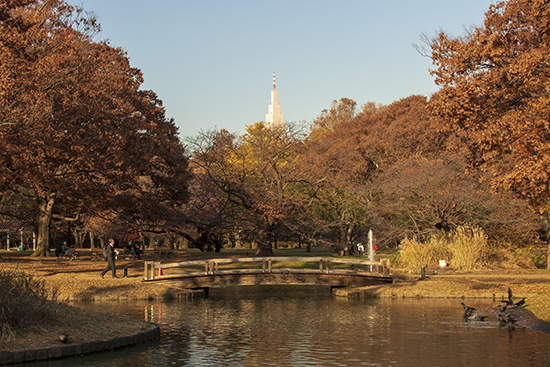 yoyogi park en otoño Tokio