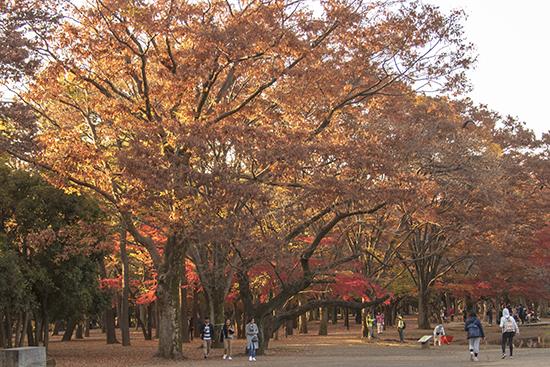 otoño en Yoyogi park