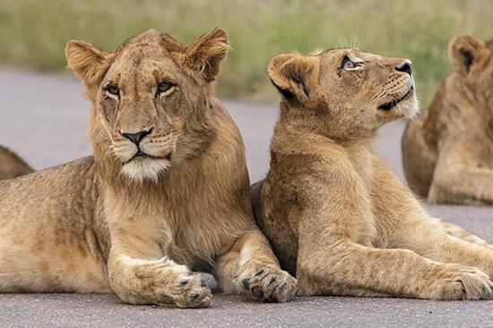Leones Kruger