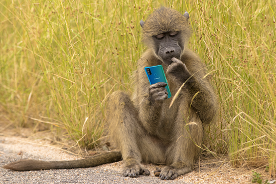 Monkey mobile