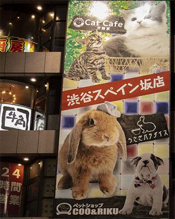Cat Cafe Tokio Coo & Riku