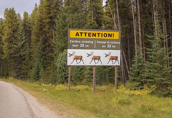 señal peligro fauna, Canada