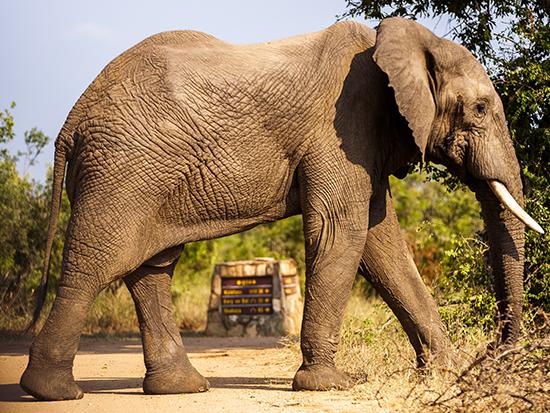 señales de tráfico en safaris