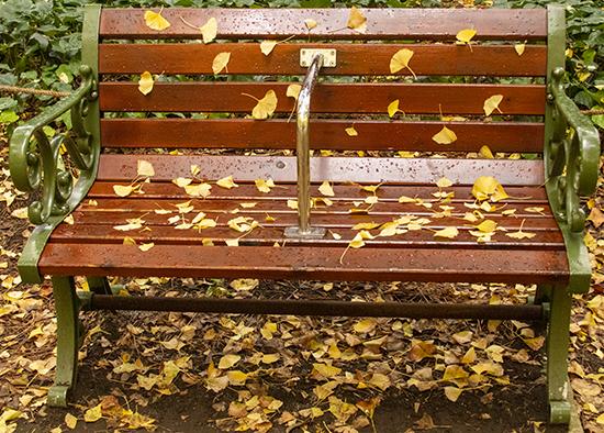 banco con hojas en otoño